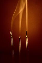 Olio essenziale di Sandalo | Corso di Aromaterapia