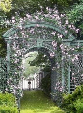 Corso di Aromaterapia: Rosa centifolia e rosa damascena