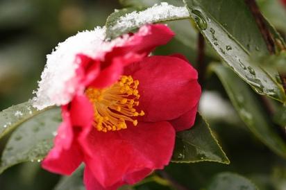 Aromaterapia: oli essenziali per i geloni