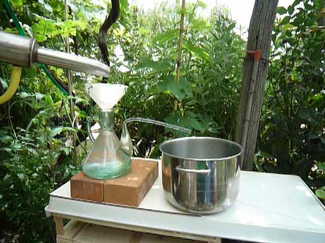 Distillazione dell'olio essenziale di Elicriso