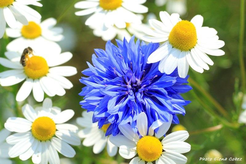 Corso di Psicoaromaterapia e fiori di Bach