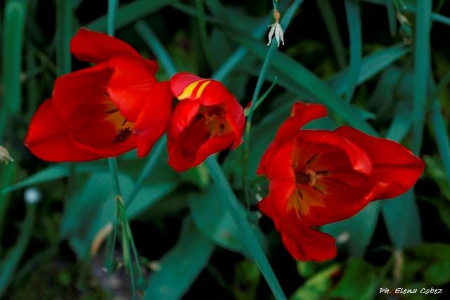 Aromaterapia per la Pasqua