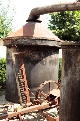 Distillazione dell'olio essenziale di menta a Pancalieri