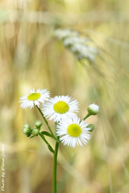 Corsi di Aromaterapia e Distillazione degli Oli essenziali