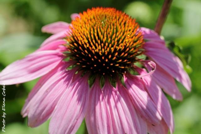 Corsi di Aromaterapia e Oli essenziali