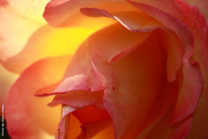 Corso Online di Profumeria botanica