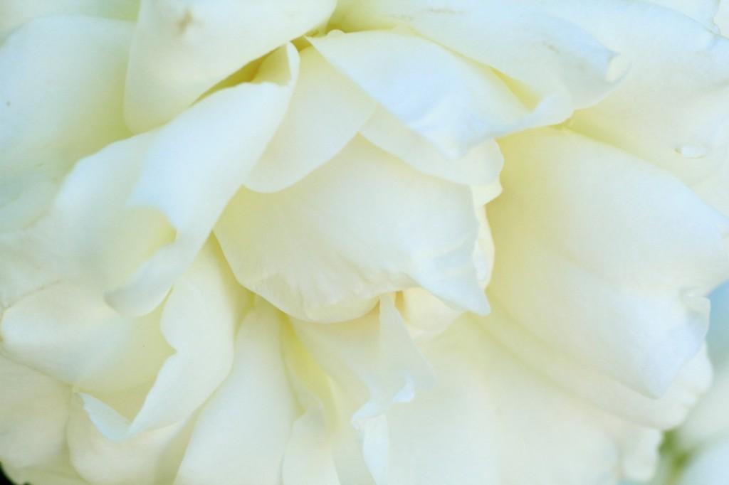 Cosmesi e Aromaterapia emozionale