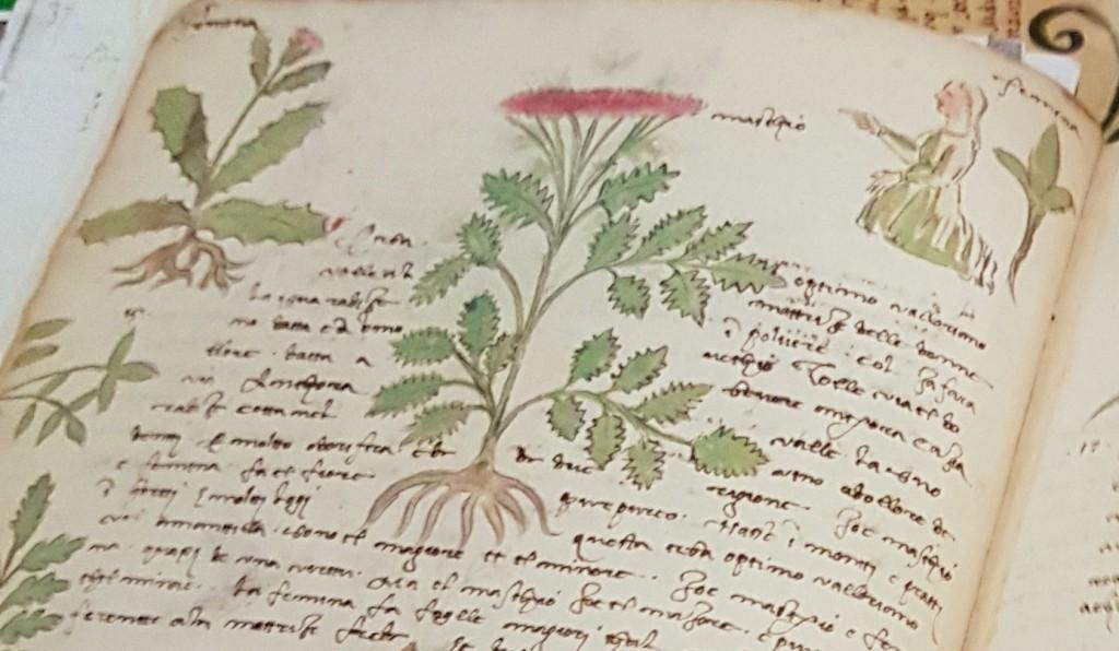 Profumi , erbe e aromaterapia