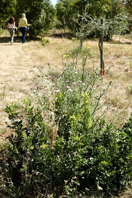 elena cobez corsi di aromaterapia e profumeria botanica