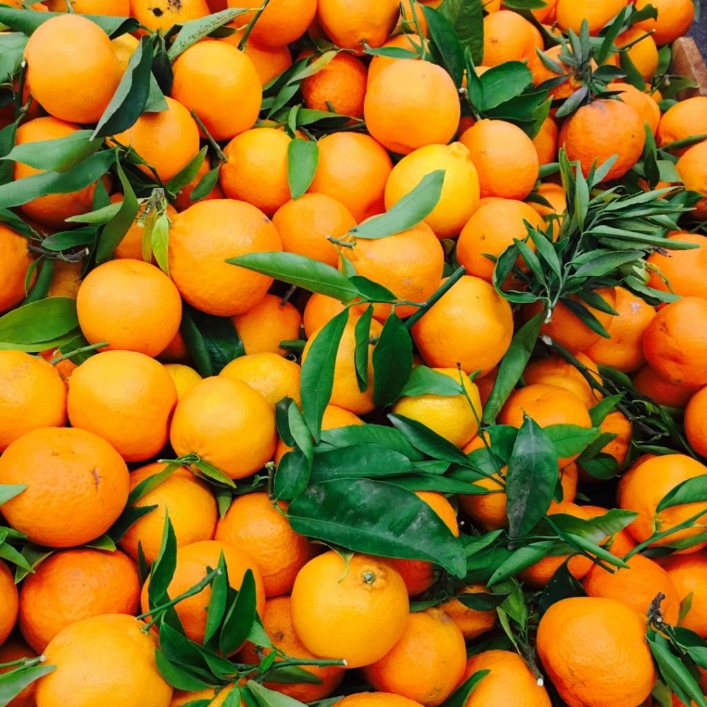 arancio dolce natale solstizio inverno