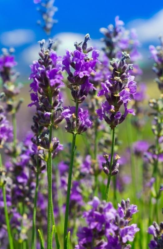 aromaterapia ansia stress aria