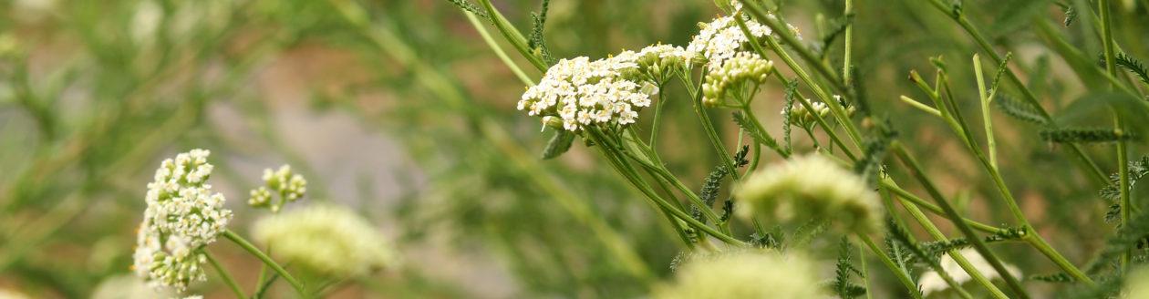 Migliora la tua vita con Aromaterapia e Profumeria botanica!