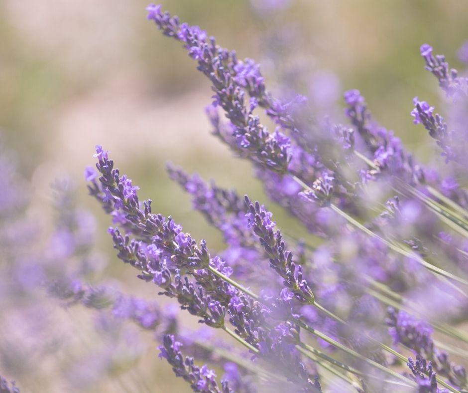 emotional aromatherapy aromaterapia emozionale