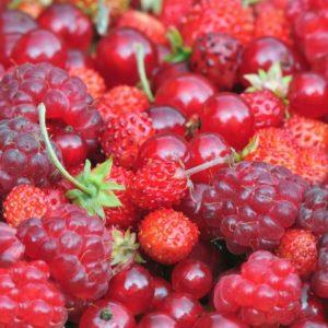 frutti rossi rimettersi in moto