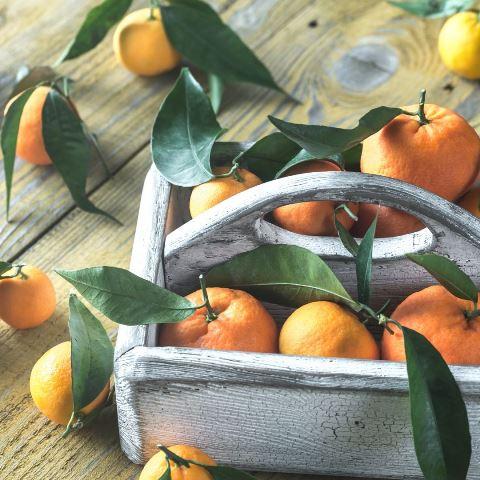 citrus olio essenziale agrumi
