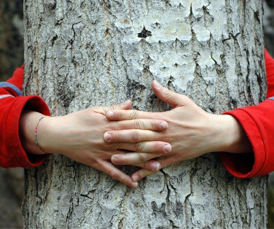 hands tree listening